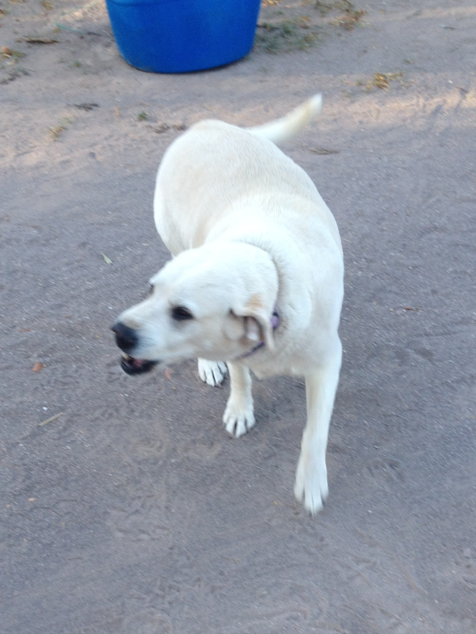 This is one of the dogs at the RV park, I nick named him Polar Bear, his real name is Juniper.